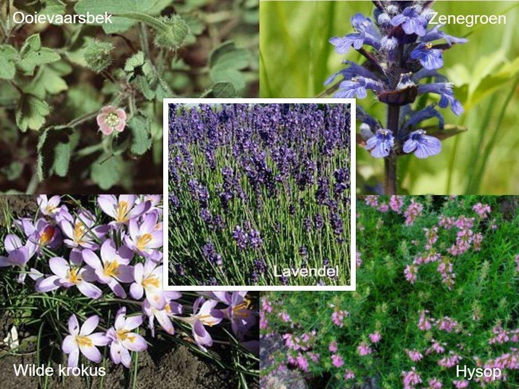 5-bijenplanten.1280x0.jpg